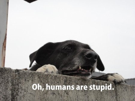 humans are stupid