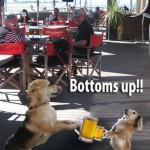 """酒を「いっき!」はBottoms up!!だけど何で""""up""""???"""