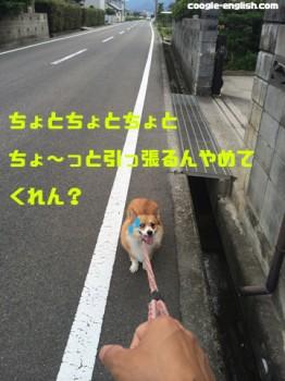 引っ張られる犬