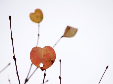 heart_shaped_leave