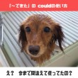 couldの用法