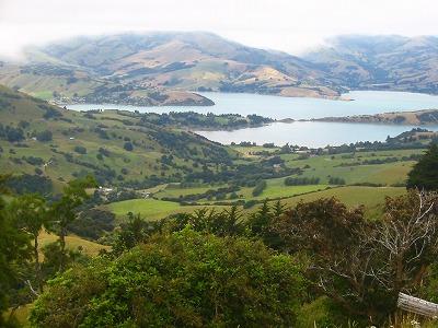 NZ Treasure